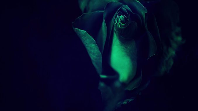 Cedric Ivory ft. Monet - Close [Future Bass]